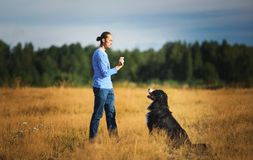 Young man walking with Bernese Mountain Dog on the summer field. Side view at a young caucasian man training Bernese Mountain Dog on the summer field stock images