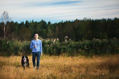 Young man walking with Bernese Mountain Dog on the summer field. Side view at a young caucasian man training Bernese Mountain Dog on the summer field stock photos