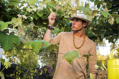 Side view of young man in hat looking at vine leaves Royalty Free Stock Photos