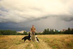 Young man walking with two dogs Bernese Mountain Dog and shepherd dogon the summer field. Side view at a young stylish caucasian man training two dogs Bernese royalty free stock photography