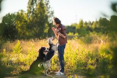 Portrait of a young man walking with two dogs Bernese Mountain Dog and shepherd on the summer field. Side view at a young stylish caucasian man with two dogs royalty free stock image