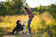 Portrait of a young man walking with two dogs Bernese Mountain Dog and shepherd on the summer field. Side view at a young stylish caucasian man with two dogs stock photo