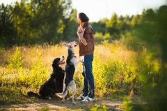 Portrait of a young man walking with two dogs Bernese Mountain Dog and shepherd on the summer field. Side view at a young stylish caucasian man with two dogs stock photography