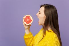 Side view of young woman in fur sweater holding in hand, biting half of fresh ripe grapefruit isolated on violet pastel royalty free stock images