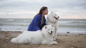 Side view of a young woman sitting on the sand and embracing her dogs of the Samoyed breed by the sea. White fluffy pets. On the beach having fun. Beautiful sky stock video