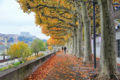 The side walk of the river saone in the autumn season,  Lyon old town,  France Stock Photography