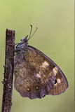 Side of  butterfly Royalty Free Stock Photos