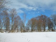 Side Zalgiriu forest in winter, Lithuania Royalty Free Stock Photography