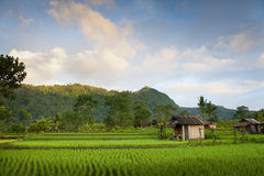 Sidemen, Bali Morning. A beautiful warm morning out on the rice fields of Bali, Indonesia Royalty Free Stock Images
