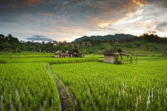 Sidemen, Bali Sunrise. The volcano Gunung Agung can be seen in the background during this magnificent sunrise over the beautiful rice fields Royalty Free Stock Images