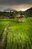 Sidemen, Bali Sunrise. The volcano Gunung Agung can be seen in the background during this magnificent sunrise over the beautiful rice fields Royalty Free Stock Photos