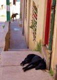 Sidenwalk με το σκυλί ύπνου στο νότο - αμερικανική πόλη Στοκ εικόνα με δικαίωμα ελεύθερης χρήσης