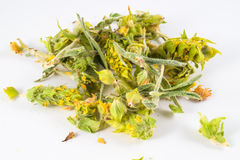 Sideritis in white background Royalty Free Stock Image