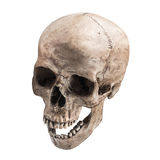 Sidetview human skull open mouth isolated. Sideview of human skull open mouth on isolated white background stock image