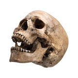 Sidetview ludzkiej czaszki otwarty usta odizolowywający Obrazy Stock