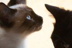 Sideview av katten Royaltyfria Bilder