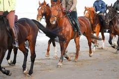 Sideview Gruppen-Pferderueckenreiten auf dem Strand Lizenzfreie Stockfotos