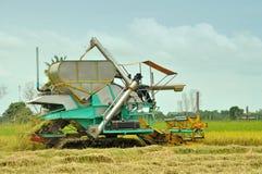 Sideviewen av jordbruksarbetareplockningrice Royaltyfri Bild