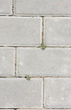 Sidewalk. Paved by a stone Royalty Free Stock Photos