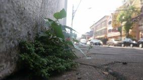 sidewalk Stock Foto's