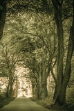 Sidewalk alley path with trees in park. Stock Photography