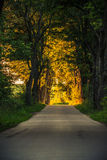 Sidewalk alley path with trees in park. Royalty Free Stock Photos