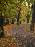 Sidewalk in autumn park Stock Photo