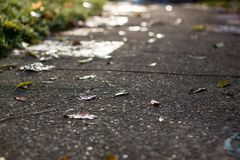 Sidewalk in autumn strewn with leaves royalty free stock photography