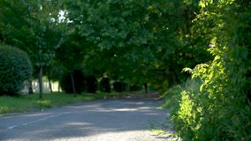Sidewalk. Blurred poplar trees on background. Cars are driving along the road. Poplar fluff flies in the air. Side-walk. Blurred poplar trees on background stock video footage