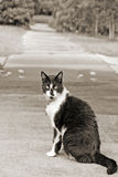 Sidewalk cat Stock Images