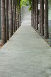 Sidewalk Center Tree Royalty Free Stock Photos