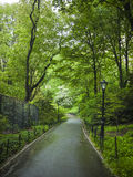 Sidewalk in Central Park, New York City Royalty Free Stock Image
