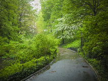 Sidewalk in Central Park, New York City Royalty Free Stock Photo