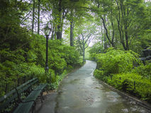 Sidewalk in Central Park, New York City Royalty Free Stock Photography
