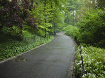 Sidewalk in Central Park, New York City Royalty Free Stock Images