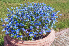 Sidewalk decorated with earthenware pot filled with blue flowers Royalty Free Stock Photo