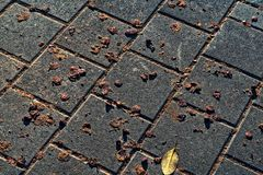 Sidewalk dirtied by tree droppings stock photos