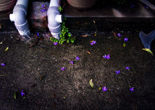 Sidewalk and fallen purple flower petals Royalty Free Stock Images