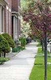 Sidewalk with Flowering Trees. Neighborhood atmosphere of sidewalk with flowering crabapple trees Stock Photography