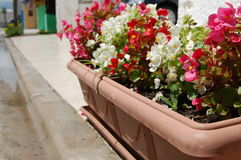 Sidewalk flowers. In a Small village in Brazil stock photography