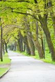 Sidewalk in Forest Stock Photography