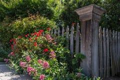 Sidewalk garden details Royalty Free Stock Photos