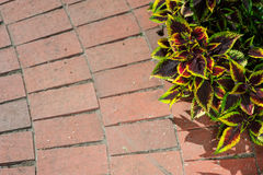 Free Sidewalk In The Garden Begonia Stock Images - 68455594