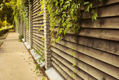 Sidewalk with ivy green lianas over fence Royalty Free Stock Photo