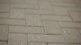 Sidewalk and legs of pedestrians. On stone pavement pedestrians walking legs stock video footage