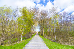 Sidewalk on a levee at the Baltic Sea Royalty Free Stock Images