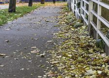 Sidewalk lined with fallen leaves royalty free stock images