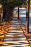 Sidewalk with long shadows in Stone Mountain Park, USA. View of sidewalk with long shadows of trees in the Stone Mountain Park in sunny autumn day, Georgia, USA Royalty Free Stock Photography