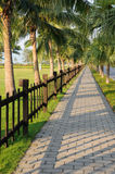 Sidewalk with palm trees. Royalty Free Stock Images