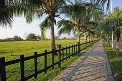 Sidewalk with palm trees. Sidewalk with palm trees at Yalong bay,Sanya,Hainan,China Stock Photo